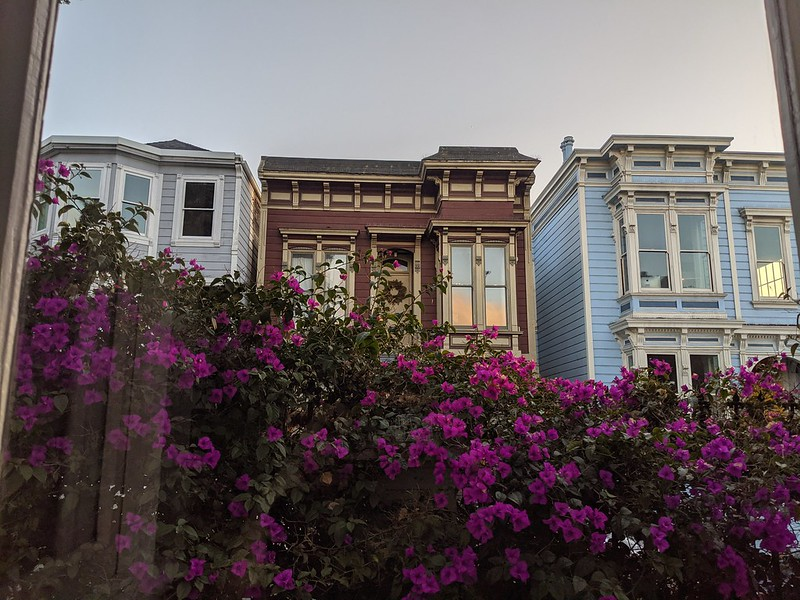 victorian houses and bougainvillea flowers