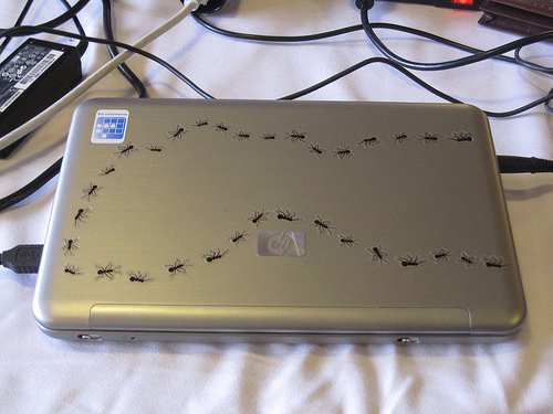 Bugs on a laptop